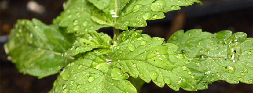 افزایش بهره وری در سیستم گلخانه هوشمند