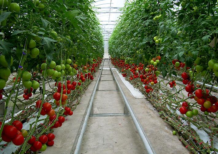 ساخت گلخانه چقدر هزینه دارد؟