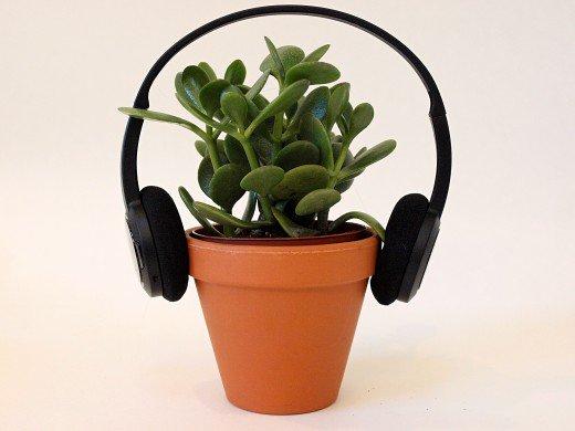 اجرای موسیقی برای گیاهان: موسیقی چه تاثیری بر رشد گیاه گلخانه دارد؟