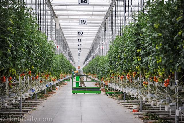 ۳ دسته فعالیت کشاورزی تسهیلات بانکی نامحدود دریافت میکنند.
