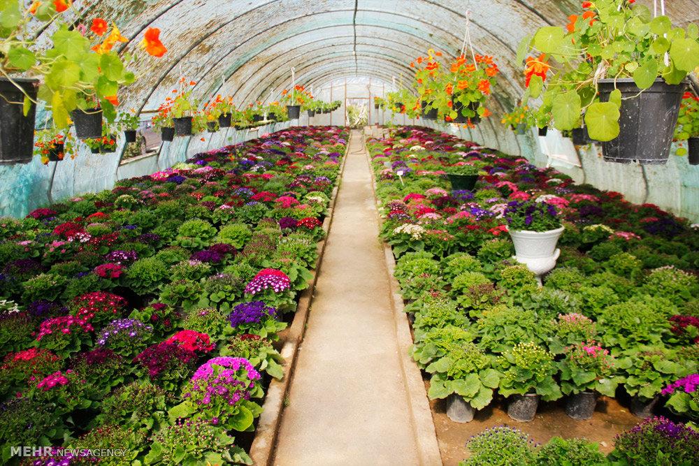 کشت گلخانه ای در دستور کار جهاد کشاورزی است