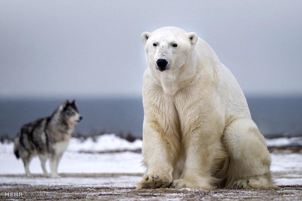 برداشت اولین محصولات کشاورزی از گلخانه قطبی
