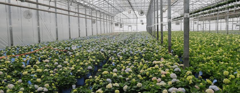 هفت عادت گلخانه داران برتر