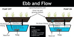 کشت هیدروپونیک روش جذر و مدی (Ebb and Flow)
