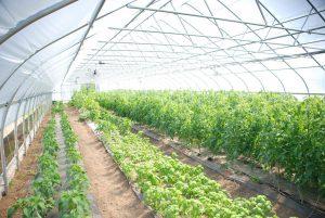 کنترل اقلیم گلخانه